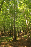 Green Forest In The Summer Royalty Free Stock Images