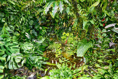 Green forest jungle Stock Images