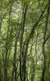 Green forest in La Palma. Canary Islands. Spain Stock Photography