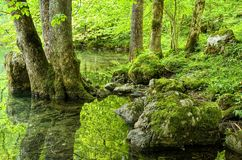 Green forest lake Stock Images
