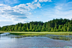 Green forest and lake Royalty Free Stock Photography