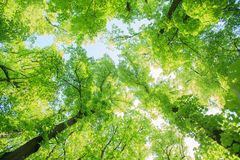 Green forest landscape Stock Photo