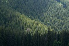 Green forest landscape. In northern Romania, Carpathian mountains Royalty Free Stock Photo