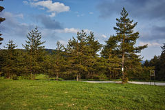 Green Forest Landscape in Rhodopes Mountain Stock Photos
