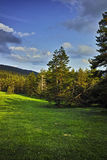 Green Forest Landscape in Rhodopes Mountain Stock Photo