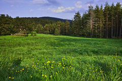 Green Forest Landscape in Rhodopes Mountain Stock Photography