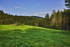 Green Forest Landscape in Rhodopes Mountain Royalty Free Stock Photography