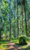 Green forest landscape with sunbeams Royalty Free Stock Image