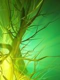Green Forest Light Stock Photos