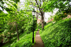 Green forest with lots of trees and a lone streetlight Royalty Free Stock Image