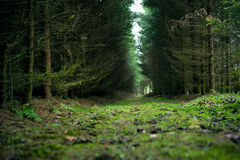 Green forest in a magic light. Royalty Free Stock Photography
