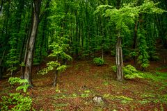 Green forest in mid spring Stock Image