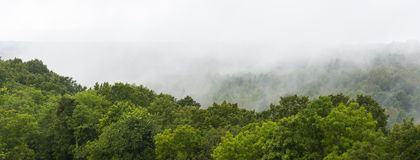 Green forest and mist Stock Image