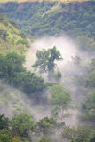 Green forest in misty morning. Uganda Africa Stock Photos