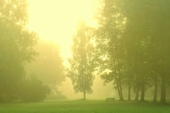 Green forest with morning mist Royalty Free Stock Photography