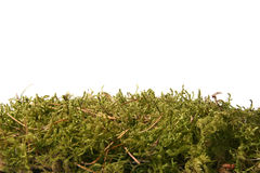 green forest moss Royalty Free Stock Image