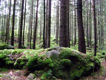Green forest and moss in the royalty free stock photo