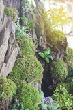 Green forest moss stock images