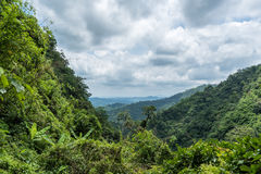 Green forest on mountain range landscape with cloudy sky Royalty Free Stock Image