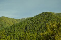 Green forest. On a mountain side on the island of Tenerife Stock Images