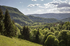 Green forest in mountain Stock Images