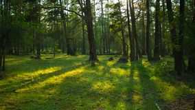 In the green forest. Movement of tree shadows. Time lapse stock footage