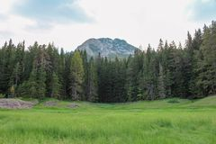 Green forest in National Park Durmitor royalty free stock images