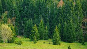 Green forest nature stock video footage
