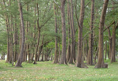 Green forest with the nature Royalty Free Stock Photos