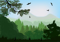Green Forest Near Mountains Stock Images