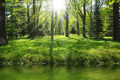 Green forest near river. In sunny day Stock Photo