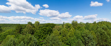 Green forest panorama Royalty Free Stock Images