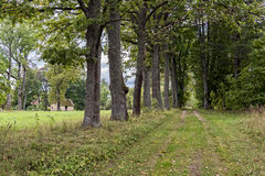 Green forest panorama in summer with road and old house in background Stock Photo
