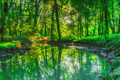 Green forest park with water stream Royalty Free Stock Image