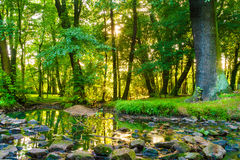 Green forest park with water stream Royalty Free Stock Photos
