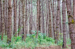 Green forest. A path is in the green forest Royalty Free Stock Photo