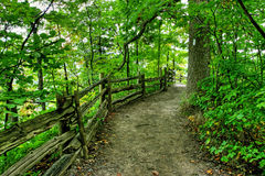Green forest path Stock Photography