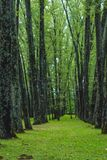 Green forest with path royalty free stock photos