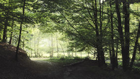 Green forest path Royalty Free Stock Images