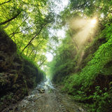 Green forest with path and sun Royalty Free Stock Photography