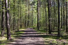 Green forest with a path. Sunny spring day. A green forest with a path. Sunny spring day royalty free stock photos