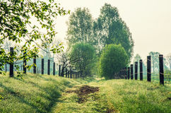 The green forest path Royalty Free Stock Photography