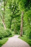 Green forest with pathway Royalty Free Stock Image