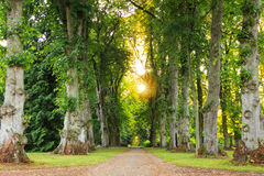 Green forest pathway with beautiful sunrays coming through Royalty Free Stock Image