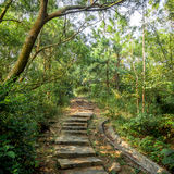 Green forest with pathway. Steps lead to the bright in autumn Royalty Free Stock Photo