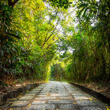 Green forest with pathway. Steps lead to the bright in autumn Royalty Free Stock Photography