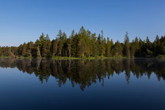 Green forest perfectly reflected on water surface Royalty Free Stock Photography