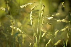 Green forest plant royalty free stock images