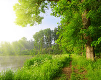 Green forest with Pond. Royalty Free Stock Image