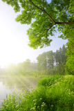 Green forest with Pond Royalty Free Stock Photography